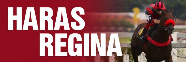 Banner Haras Regina