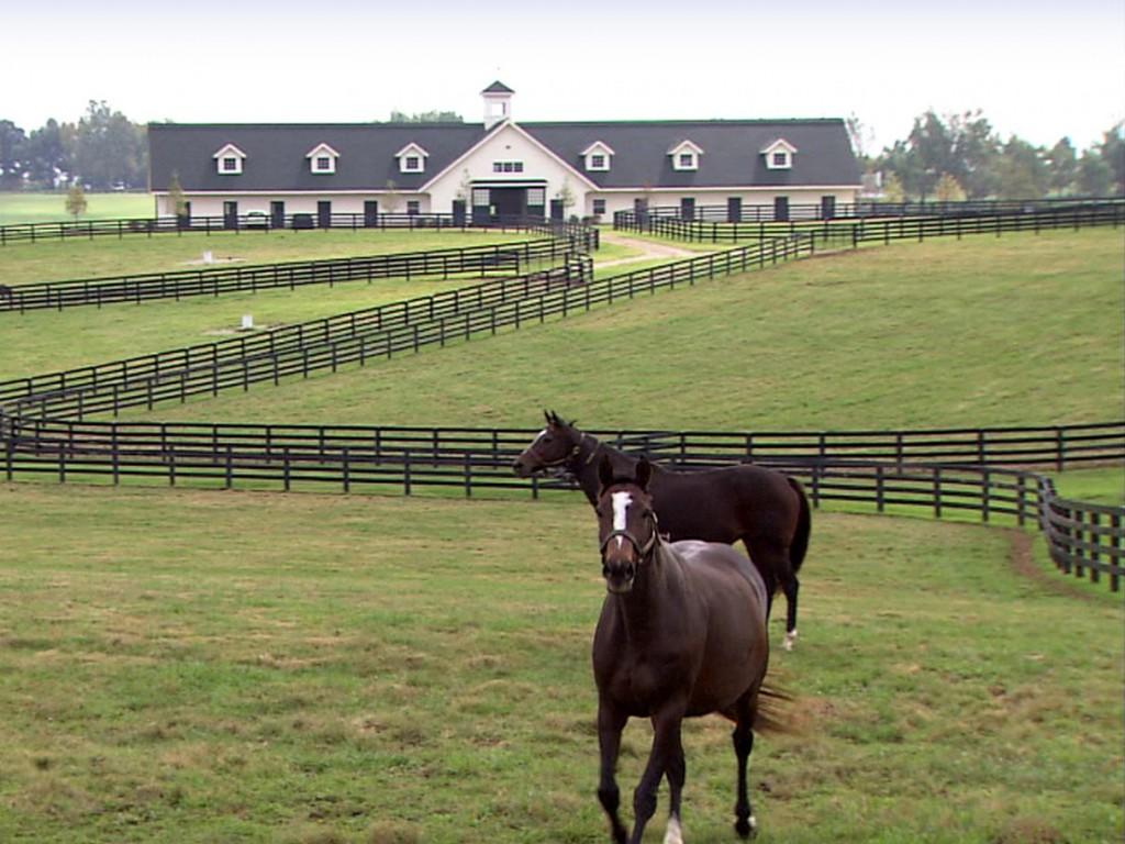 Projeto de lei que equipara cavalos a gado é aprovado no Kentucky