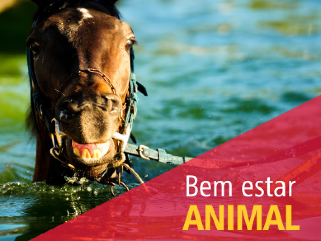 Bem-estar animal: a nova Instrução Normativa do MAPA e seus reflexos no mundo turfístico