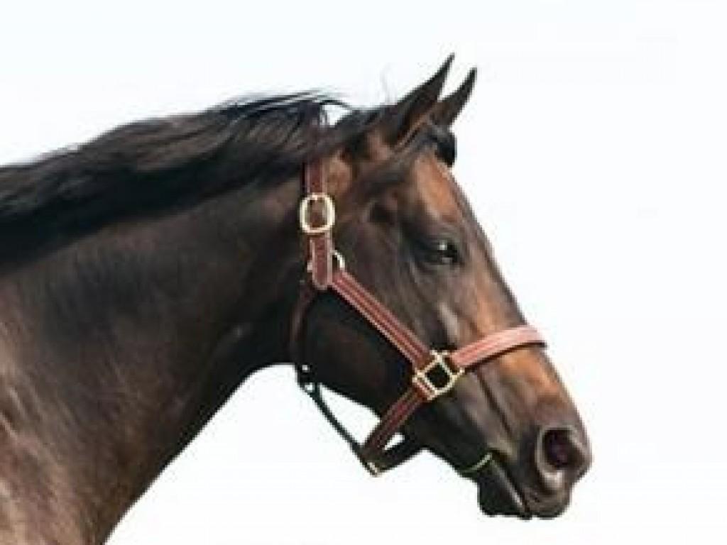 Criação: Golden Horn tem seu primeiro stakes winner