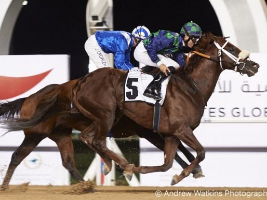Foto: Cool Cowboy, um Kodiak Kowboy, vence o Al Shindagha Sprint (gr.III) em Dubai