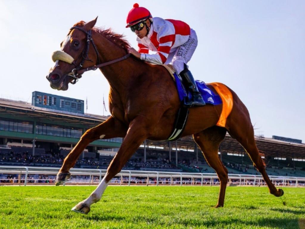 "EUA: Jolie Olímpica ""pula"" a Breeders' Cup e correrá o Matriarch Stakes (G1)"