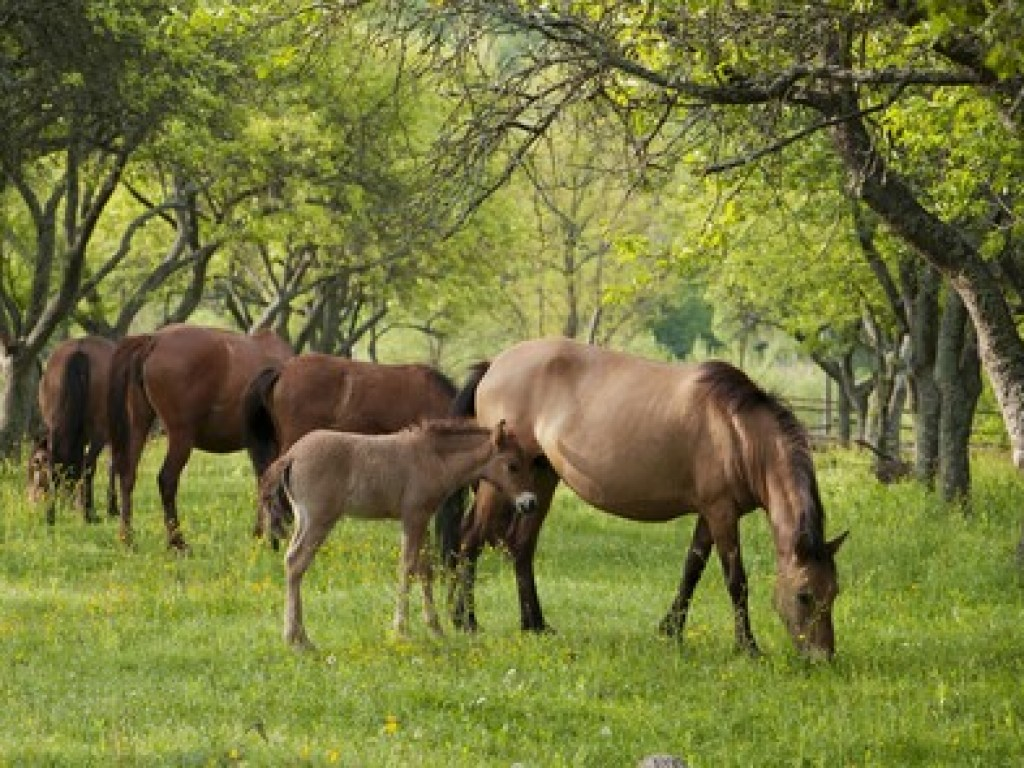 Estudo analisa impacto da dominância na alimentação animal, em grupo