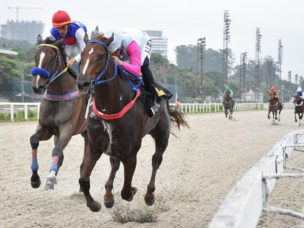Foto: Vijay conquista a primeira vitória clássica, em São Paulo