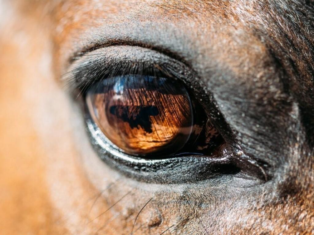 Foto: Pesquisadores da USP desenvolvem algoritmo capaz de identificar níveis de dor em equinos
